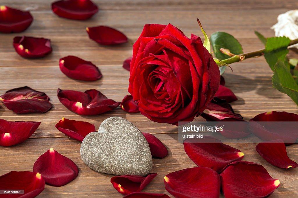 Rosen Als Geschenk Und Überraschung Zu Einem Fest Symbolfoto Für Geburtstag  Muttertag Liebe Valentinstag
