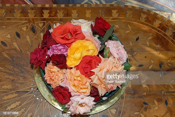 Rosen im Salon mit Gartenblick in Villa von Henriette von Bohlen und Halbach Homestory Villa Bled Targui Marrakesch Marokko Nordafrika Afrika...
