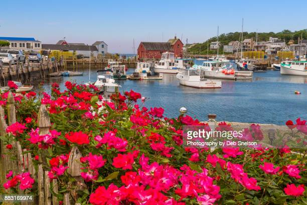 Roses and Rockport Harbor
