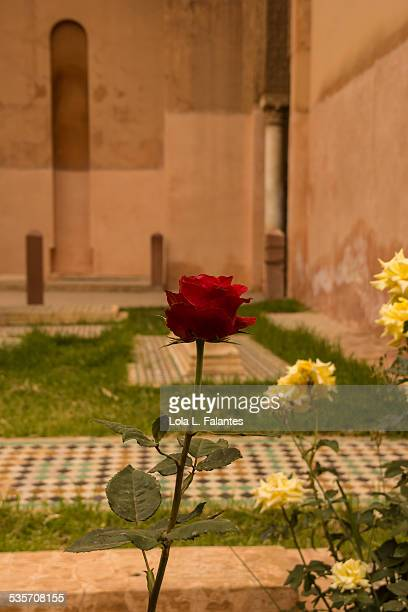 Roses and tombs
