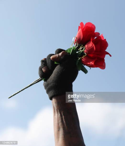 Roses are held up as a horse drawn hearse containing the remains of George Floyd drives past on its way to the Houston Memorial Gardens cemetery on...