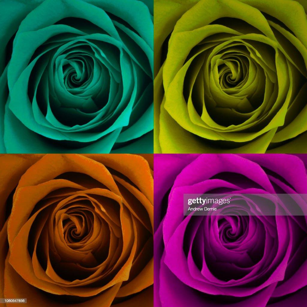 Roses background : Stock Photo