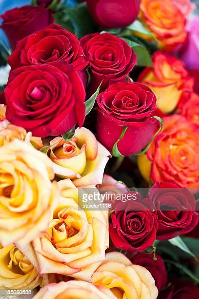 Roses en Équateur