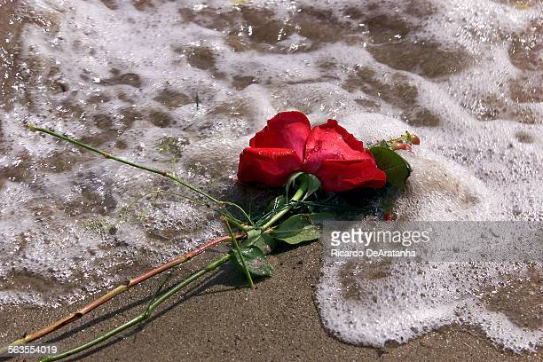 Roses from memorial washed up on the sand at Surrfers Point Surfers and family members of passed way surfers joined in a paddle out memorial forming...