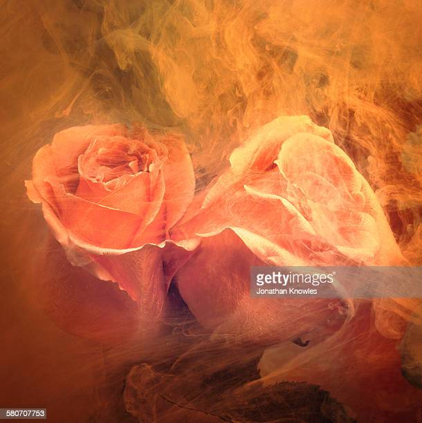 Roses in a tank of water and dissolving paint