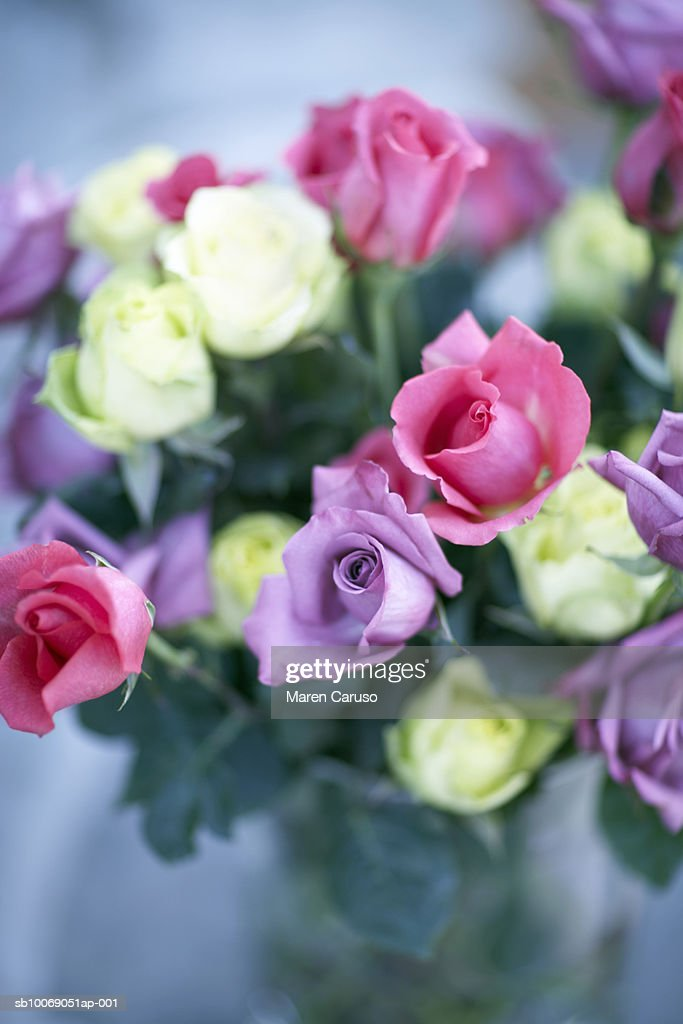 Roses in vase, close-up : Stockfoto