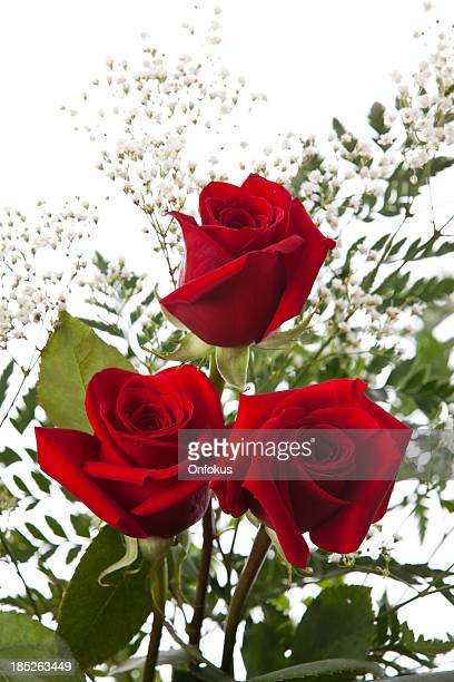 Roses isolated on white background