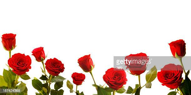Roses lined along bottom of white background
