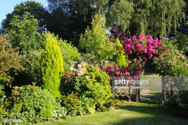 roses on  arch in sun drenched english garden. - jardin fleuri photos et images de collection