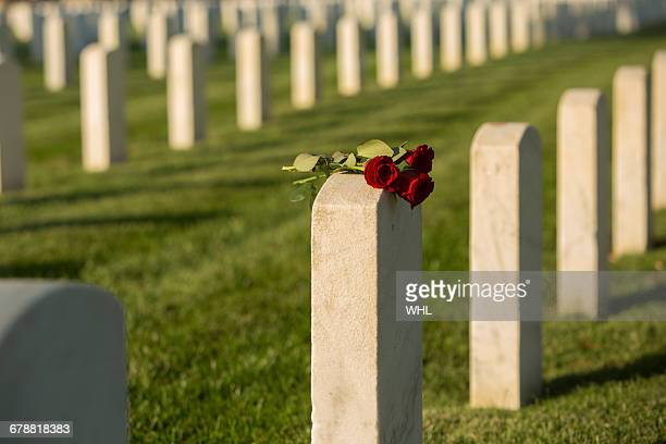 roses on cemetery gravestone - tombstone stock pictures, royalty-free photos & images