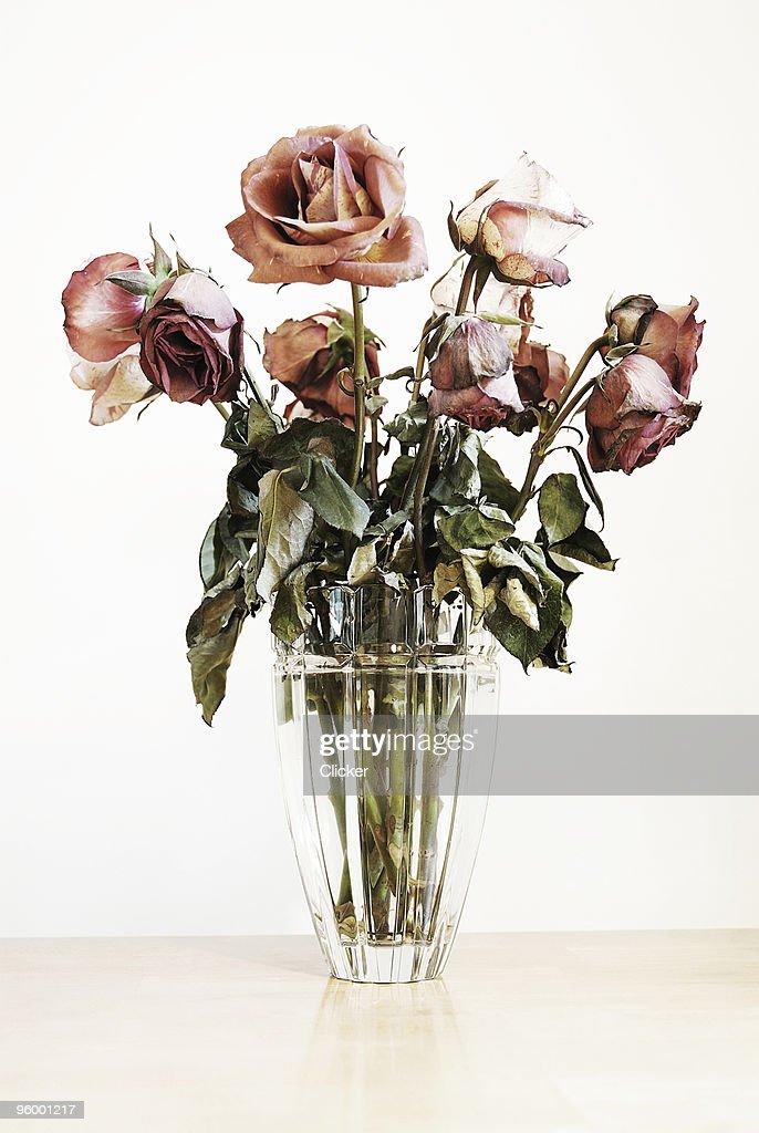 Roses : Stock Photo