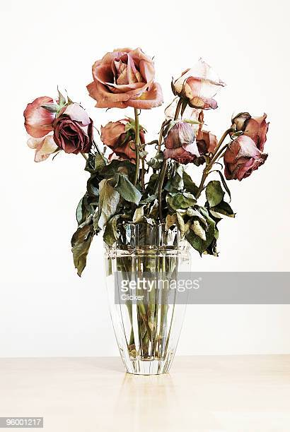 roses - dead stock pictures, royalty-free photos & images