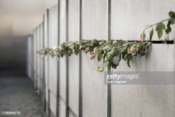 roses protruding from the berlin wall - berlin wall stock pictures, royalty-free photos & images
