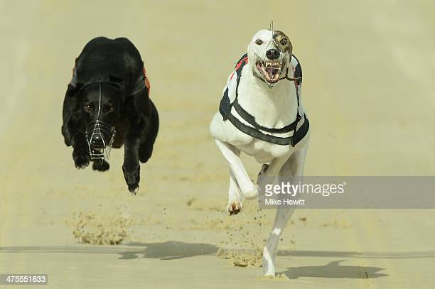 Rose's Risk wins the eleventh race from Release The Ace during the first race at the Coral Brighton and Hove Greyhound stadium on February 28 2014 in...
