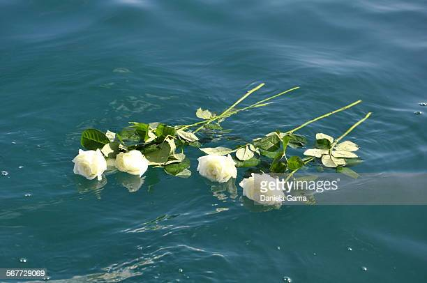 Roses to the sea
