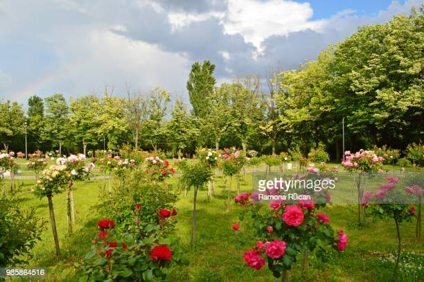 Ramona Gardens Stock Photos and Pictures | Getty Images