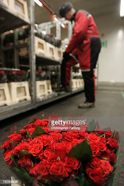 Roses wait to be auctioned at Aalsmeer Flower auction in the run up to Valentines Day on 8 February Aalsmeer Netherlands Aalsmeer Flower Auction is...