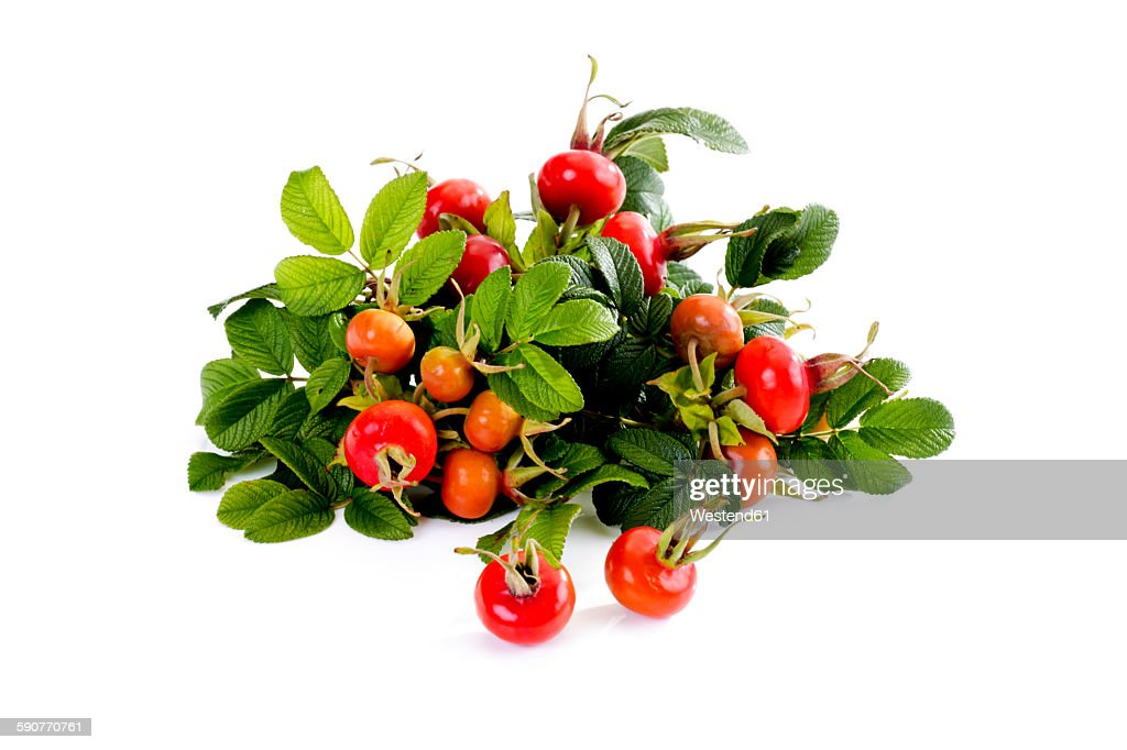 Roseships of dog rose in front of white background : Stock Photo