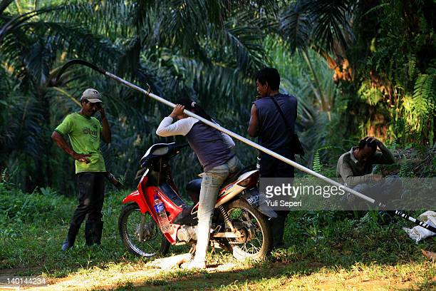 Rosman and Dwi and his friends on the oil palm plantations on February 28, 2012 in Bintan Island, Indonesia. Indonesian palm oil producers have been...