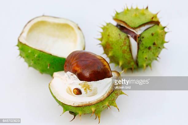 Rosskastanie horse chestnut
