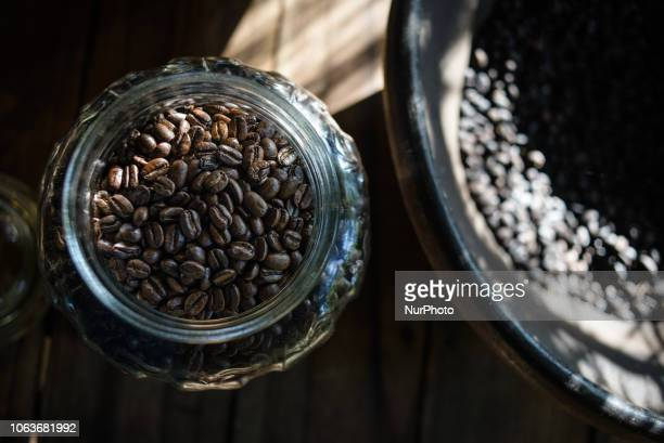 Rosted coffee beans collected from the excrement of civets at Kopi luwak farm and plantation in Ubud District Bali Indonesia on November 20 2018 Kopi...