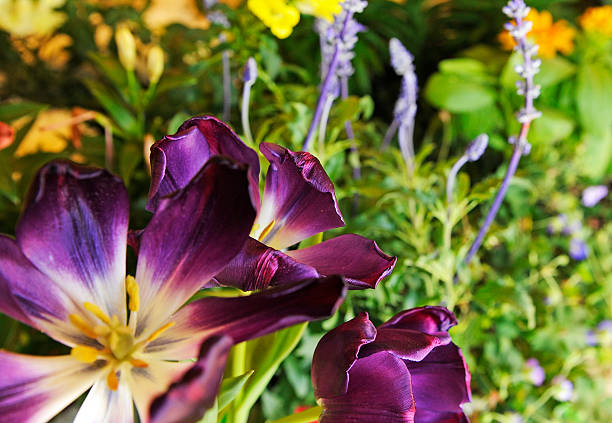 Rotary Club is volunteers deliver flowers, used during the Garden ...