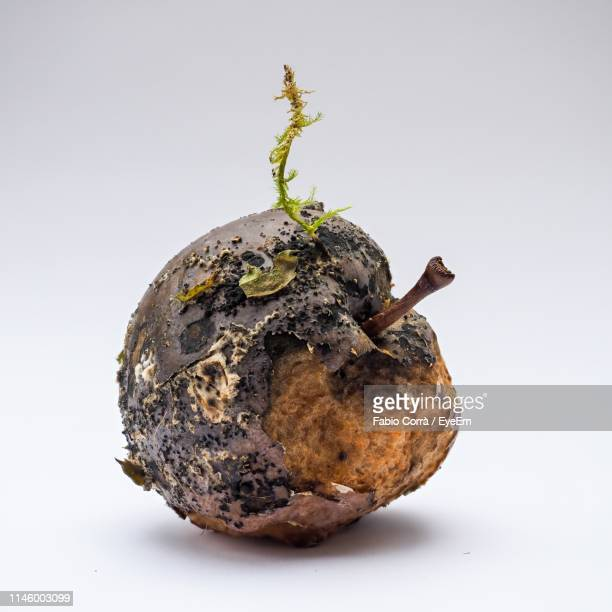 rotten apple against white background - rot stock pictures, royalty-free photos & images