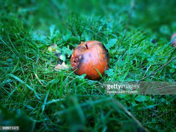 Rotten Apple On Grassy Field