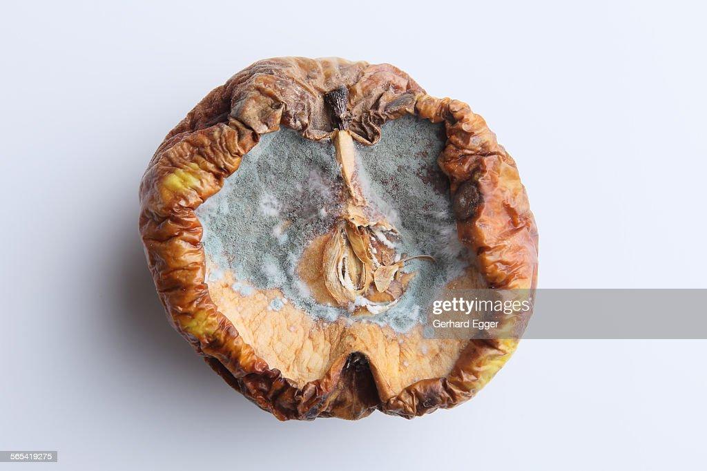 Rotten apple : Foto de stock