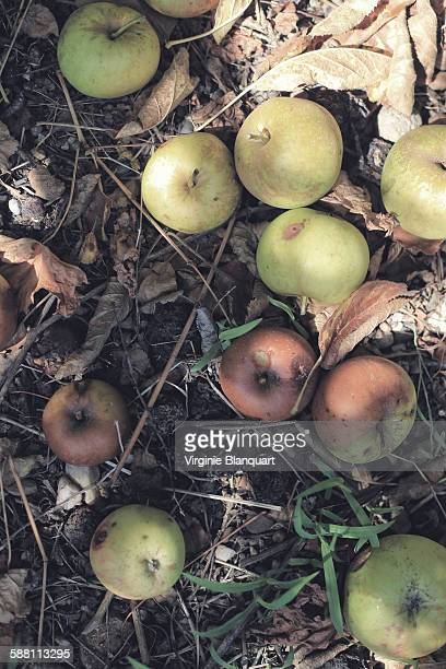 rotten apples on the ground - rhone stock pictures, royalty-free photos & images