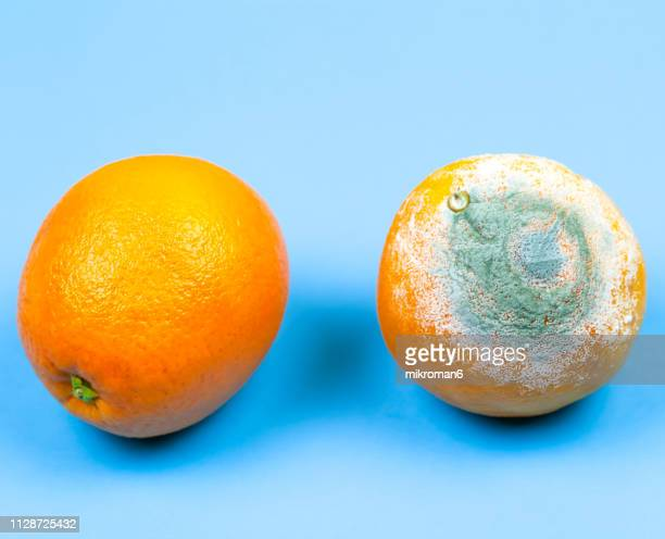 rotten orange.  moldy orange - rot stock pictures, royalty-free photos & images