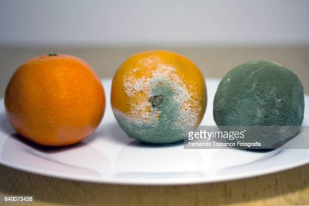 rotten oranges - rot stock photos and pictures