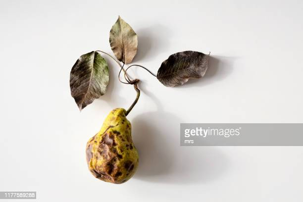 rotten pear - rot stock pictures, royalty-free photos & images