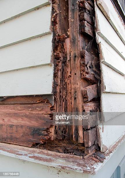 rotten wood - rot stock pictures, royalty-free photos & images