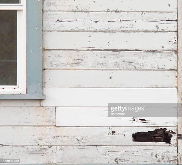 rotten bois - termite photos et images de collection