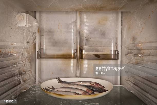 Rotting fish left in a filthy fridge.