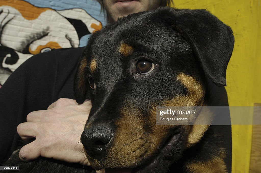 A rottweiler puppy at Wag Time enjoys some loving during his