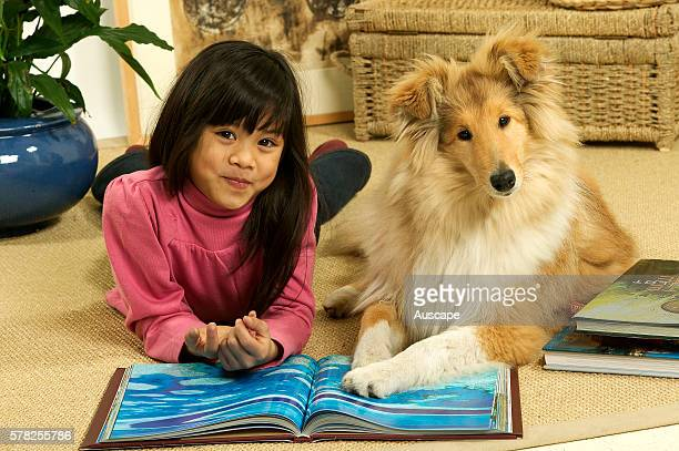 Rough collie Canis familiaris with its young owner girl