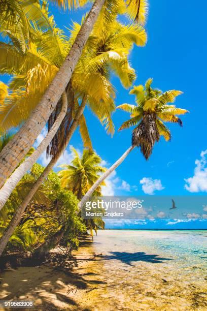Rough palm beach and lagoon at motu islet