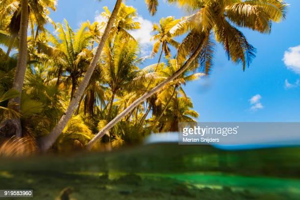 rough palm beach and lagoon at motu islet - merten snijders stockfoto's en -beelden