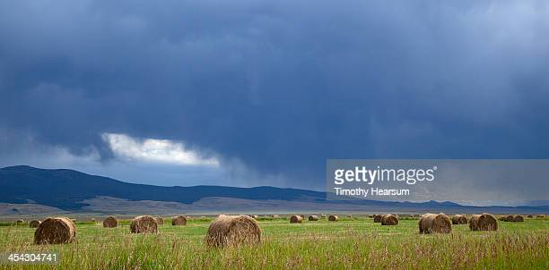 round bales in field with storm clouds - timothy hearsum fotografías e imágenes de stock