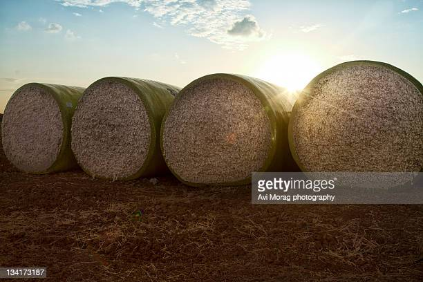 Round bales of picked cotton