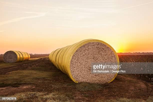 Round modules of harvested cotton at sunrise