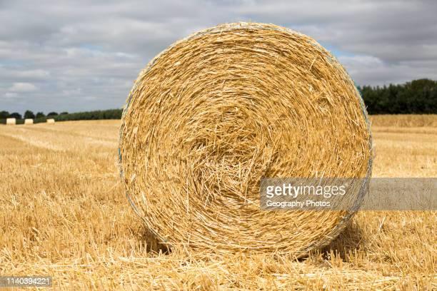 Round straw bale in flat field with overhead cumulus cloud Sutton Suffolk England UK