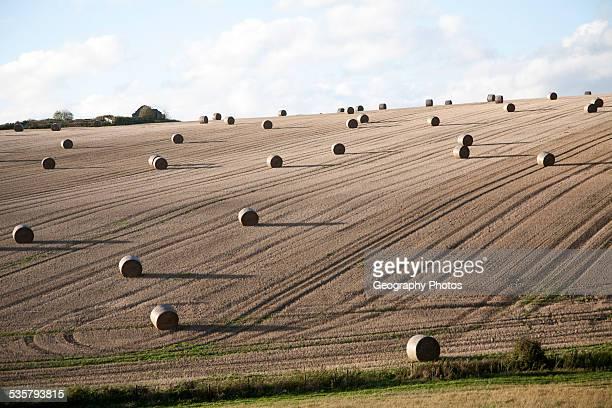 Round straw bales dotted around a sloping field Marlborough Downs chalk hills near Lockeridge Wiltshire