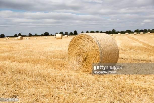 Round straw bales in flat field with overhead cumulus cloud Sutton Suffolk England UK