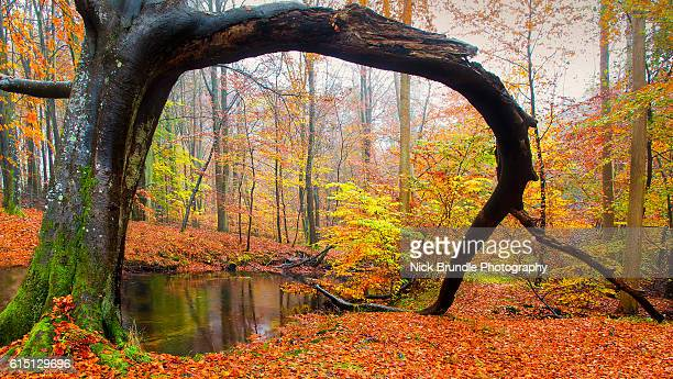 round the bend - september stock pictures, royalty-free photos & images