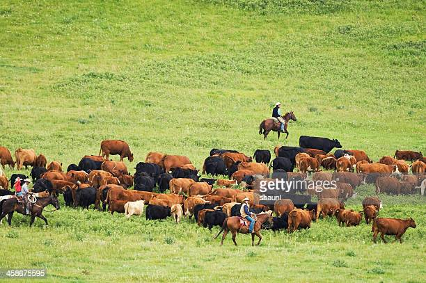 Rounding up the Herd