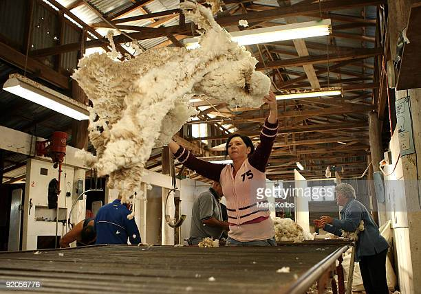 Rouseabout Reanne Brown tosses a fleece on the table during spring shearing at Cherry Hill Pastoral Company property on October 19, 2009 in Uralla,...