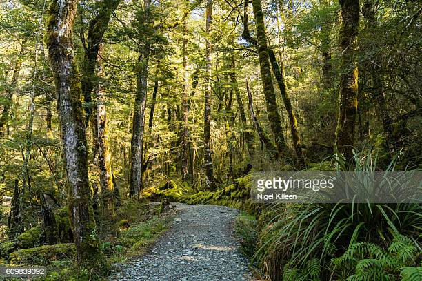 Routeburn Track, Mt Aspiring National Park, New Zealand